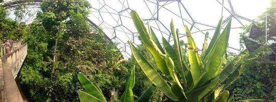 Eden Project: Jungle Dome