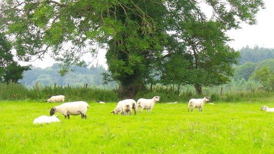 Ballyknocken House: Field view from grounds