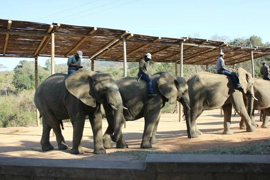 Elephant Whispers: The line up at the beginning of the presentation