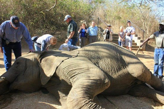 Elephant Whispers: Gaining a greater understanding of elephants