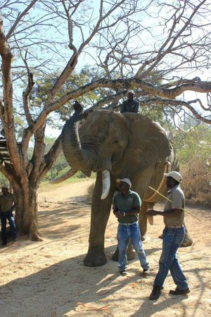 Elephant Whispers: Learning more about elephants