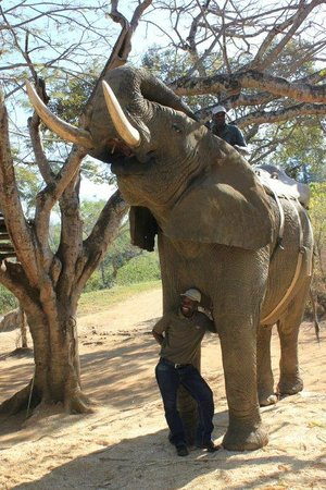 Elephant Whispers: Everyone has the opportunity to do this