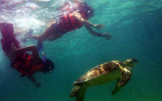 El Taj Oceanfront & Beachside Condos Hotel: Akumal swimming with turtles