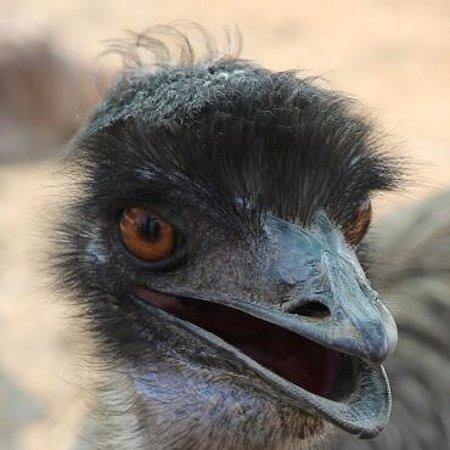 Highgate Ostrich Show Farm: Emo