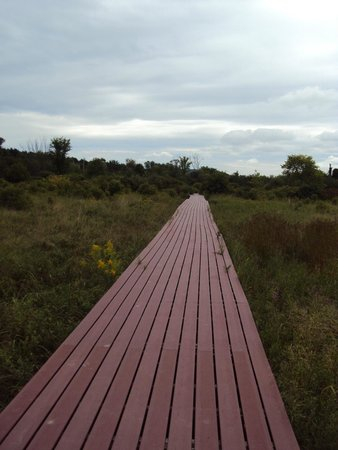Viles Arboretum: Bridge over wetland