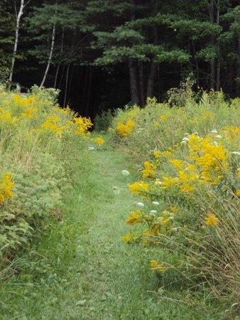 Viles Arboretum: From meadow to woods