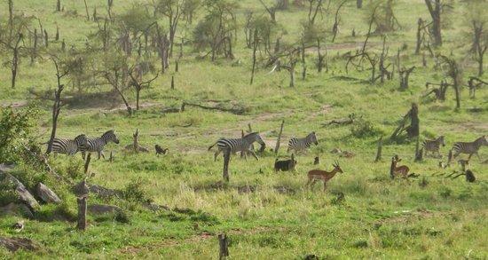 Four Seasons Safari Lodge Serengeti: view from our room