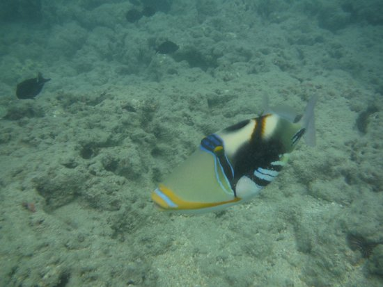 Hanauma Bay Nature Preserve: Can you name this fish?