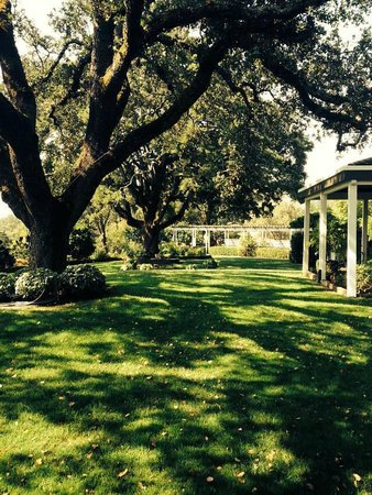 Robert Hunter Winery: Beautiful old trees in this enchanting garden.