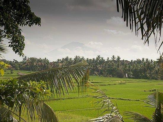 Alam Jiwa: View from balcony