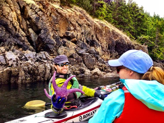 Anacortes Kayak Tours: Starfish come in exciting colors here.