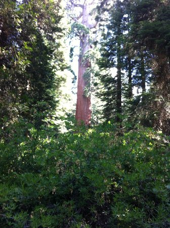 Princess Campground: Sequoia