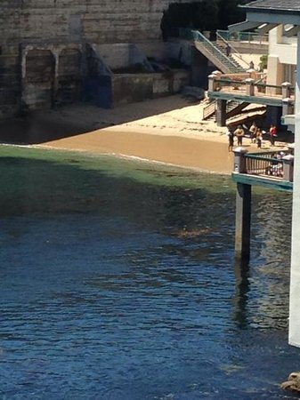 Monterey Plaza Hotel & Spa: The tiny beach next to the hotel.  Lots of brown sea weed is visible.