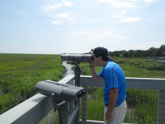 Edwin B. Forsythe National Wildlife Refuge: Viewing The Osprey Nest