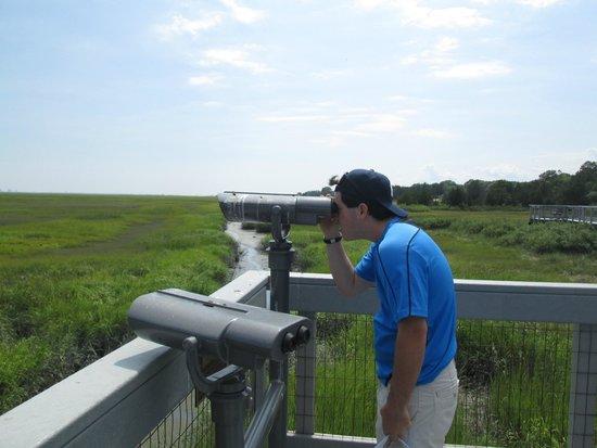 Edwin B. Forsythe National Wildlife Refuge : Viewing The Osprey Nest