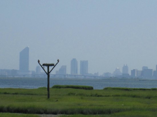 Edwin B. Forsythe National Wildlife Refuge: Osprey Nest & Atlantic City Skyline