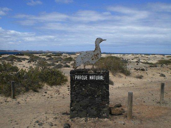 Atlantic Garden Beach Mate: Parco Naturale di Corallejo