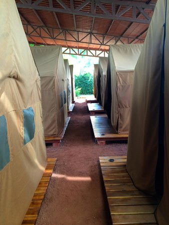 Arenal Backpackers Resort : Tent area