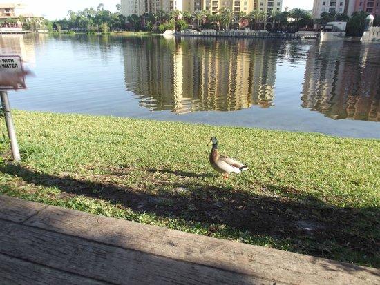 Wyndham Bonnet Creek Resort: Morning walk.