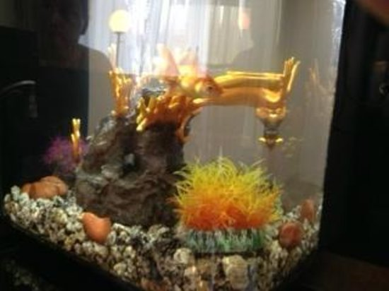 Maximilian Hotel : My adopted goldfish, Butch.