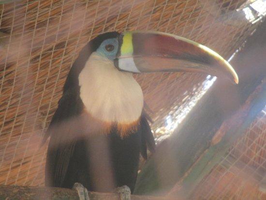 Zoo Cocodrilo Park: Tucano
