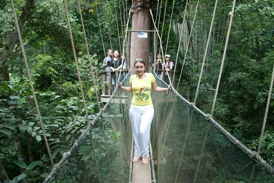 Le Meridien Kota Kinabalu: Excursion from the hotel to a treetop walk