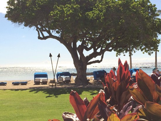 Mauna Lani Bay Hotel & Bungalows: View from the pool and Ocean Grill.
