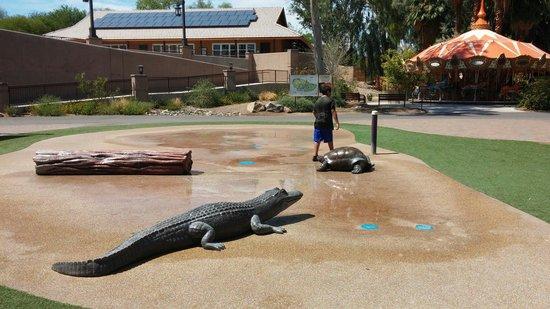 Phoenix Zoo : Waterpark