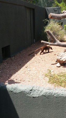 Phoenix Zoo : It was constantly moving