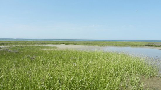 Mudflats & Dunes on the Wing's Island trail