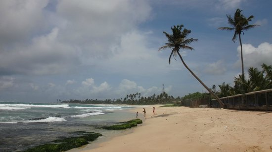Imagine Villa Hotel: PLages et cocotiers, inutile d'alller chercher plus loin que l'hotel