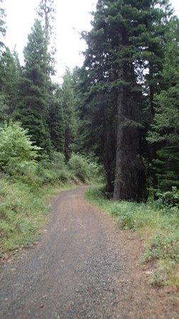Ponderosa State Park: Easy portion of Huckleberry trail