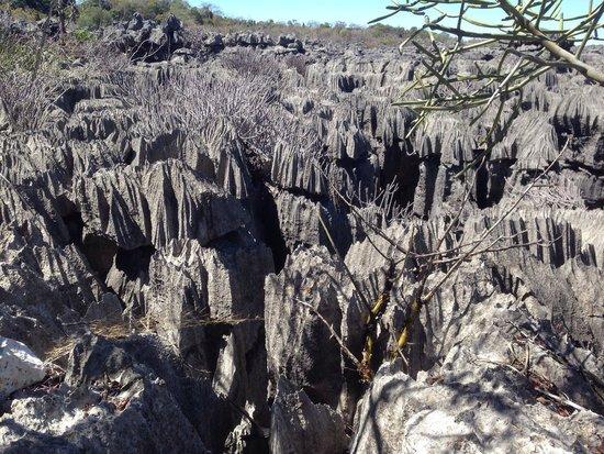 Ankarana Reserve: Les Tsingy d'Ankarana