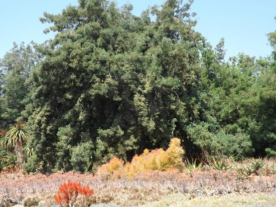 Los Angeles County Arboretum & Botanic Garden: View of some of the terrain near the Madagascar area of the park