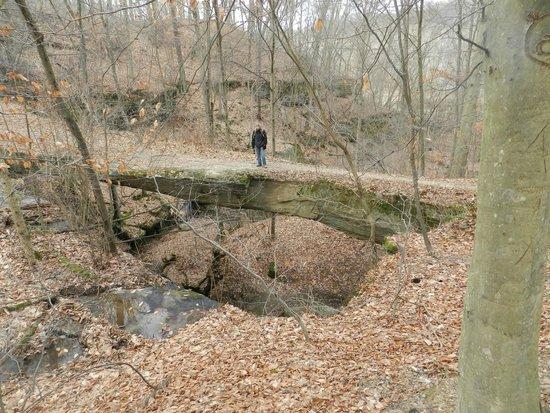 Rockbridge State Nature Preserve : looking down at the bridge