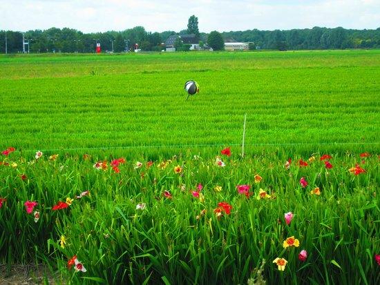 Hotel Restaurant De Nachtegaal: Flower field opposite the hotel