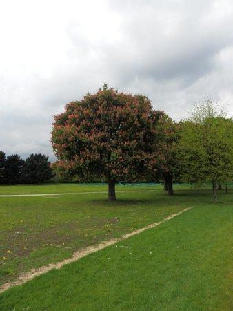 Regent's Park: Atardecer
