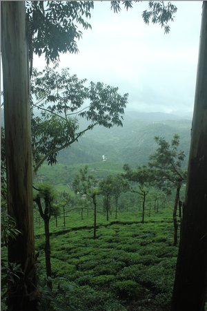 Tea Valley Resort: view from our cottage