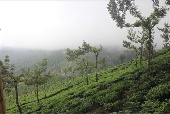Tea Valley Resort: view from cottage