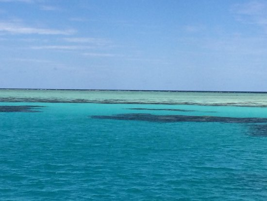 Passions of Paradise Reef Tour : Love the varying colors among the reefs!