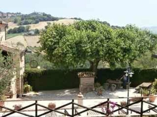 Agriturismo Vecchio Gelso: The old mulberry tree with restaurant entrance on the left