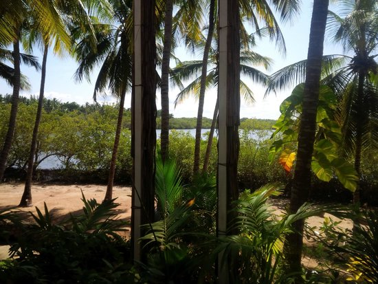 Pilipan Restaurant - Watamu: Mida Creek through the trees