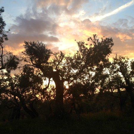 Azienda Agrituristica Il Moraiolo: tramonto presso Il Moraiolo