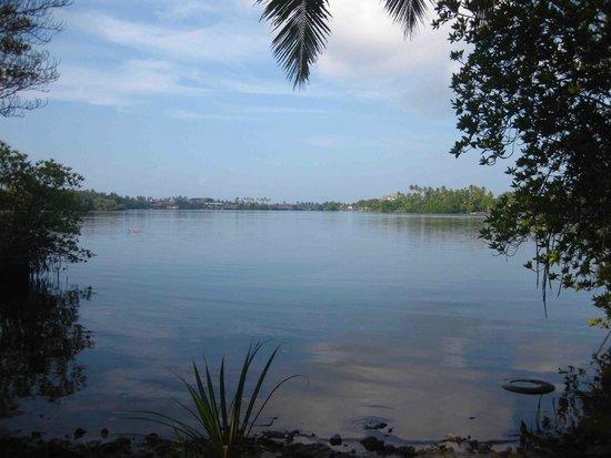 Bentota, Sri Lanka: backyard view of
