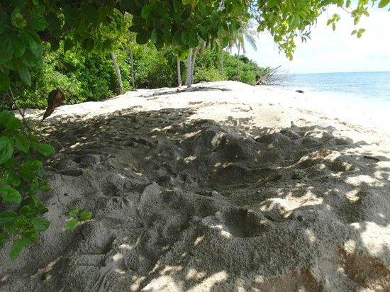 Selingan Turtle Island: trous tortues