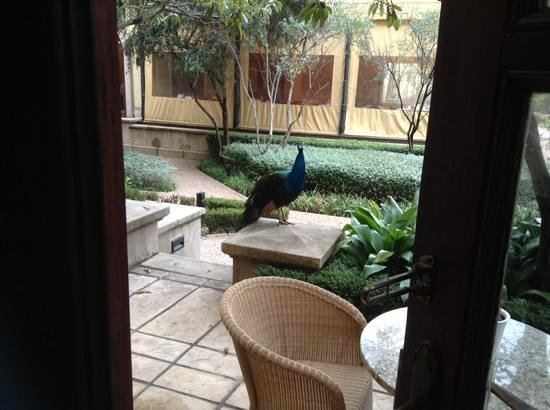 The Palazzo Montecasino: peacocks strolling right outside our room.