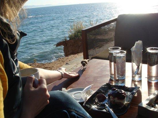 Notos Cafe : Столик на самом краю обрыва перед морем, чуть вдали от кафе. Прекрасно!