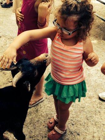 Zoo de la Palmyre : Enclos des biquettes