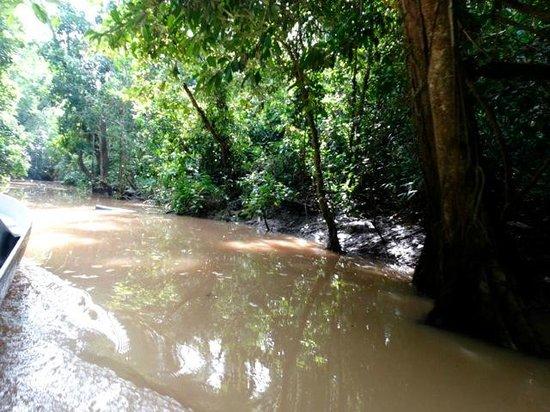 Kinabatangan Riverside Lodge: excursion bateau