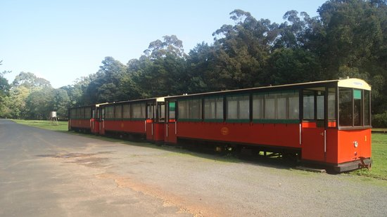 Pemberton Tramway: Trams all in a row